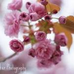 Blossom - 8x12 Fine Art Ph..