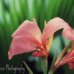 Pink Flower - 8x10 Photogr..